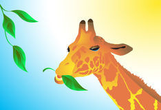 The giraffe eats green leaves. Vector. Royalty Free Stock Image
