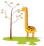 Giraffe eats leaves Stock Image