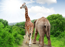 Giraffe and elephant Royalty Free Stock Photos