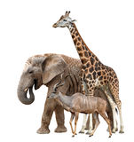 Giraffe, Elephant and Kudu Stock Photo