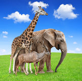 Giraffe with elephant and kudu. On meadow Royalty Free Stock Images