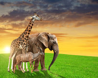 Giraffe, elephant and kudu Stock Images