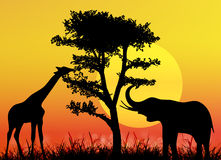 Giraffe and elephant in National park Royalty Free Stock Photography