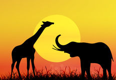 Giraffe and elephant in National park Royalty Free Stock Images