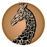 Giraffe. Emblem with giraffe head in the disk Royalty Free Stock Photos