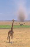 Giraffe et tempête de sable dans l'amboseli, Kenya Photos stock
