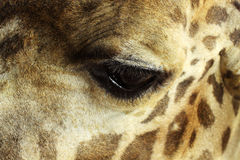 Giraffe eye Stock Images