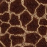 Giraffe fell. The texture giraffe fell,  suits for duplication of the background, illustration Royalty Free Stock Photography