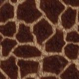 Giraffe fiel Lizenzfreie Stockfotografie