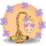 Giraffe with flowers Stock Images