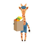 Giraffe with a food bag Stock Photography