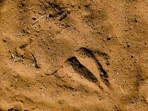 Giraffe Footprint Royalty Free Stock Photos