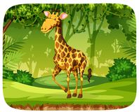 A giraffe in the forest stock image