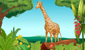 A giraffe in the forest Royalty Free Stock Images