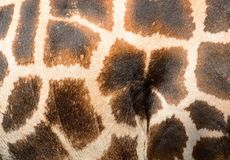 Giraffe fur Royalty Free Stock Photos