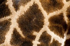 Giraffe fur pattern Stock Photo