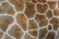 Giraffe fur pattern. Animal skin background royalty free illustration