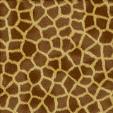 Giraffe fur texture. In shades of yellow and brown Stock Images