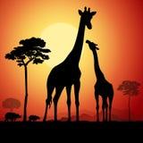 Giraffe Royalty Free Stock Photo
