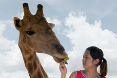 Giraffe with girl Royalty Free Stock Photos