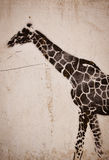 Giraffe graffiti Stock Image