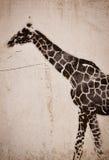 Giraffe graffiti Stock Image