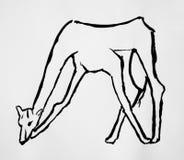 Giraffe cartoon illustration isolated Royalty Free Stock Images