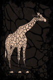 Giraffe on grunge texture Royalty Free Stock Images