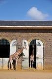 Giraffe-Haus Stockfoto
