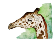 Giraffe head stock illustration