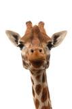 Giraffe head Stock Photos
