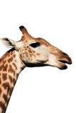 Giraffe Head And Neck Stock Photos