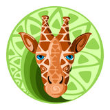Giraffe head. Design vector illustration. Giraffe head. Design color vector illustration Royalty Free Stock Images