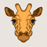 Giraffe head face realistic Royalty Free Stock Photography