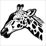 Giraffe head 1 Royalty Free Stock Image