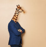 Giraffe headed businessman with his arms folded. Portrait of giraffe headed businessman, wearing blue suit with his arms folded, leaning at blanked space for Stock Photos