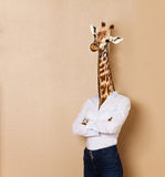 Giraffe headed woman dressed up in office style Royalty Free Stock Photos