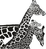 Giraffe heads Stock Photos