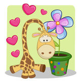 Giraffe with heart and flower Royalty Free Stock Images
