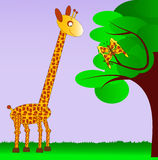 Giraffe and her butterfly sibling. Giraffe watching at the butterfly on the tree, the wings of a butterfly have the same pattern as the skin of a giraffe Stock Photography