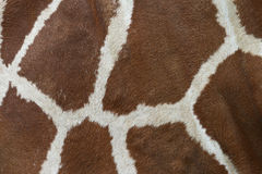 Giraffe Hide Pattern Royalty Free Stock Photos
