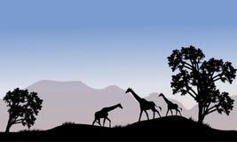 Giraffe in hills scenery Stock Image