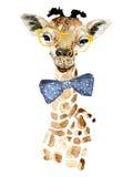 Giraffe hipster Royalty Free Stock Photography