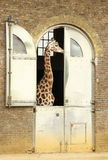 Giraffe House Royalty Free Stock Photos