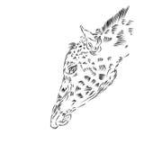 Giraffe Illustration Stock Photos