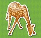 Giraffe Stock Photos