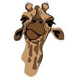 Giraffe illustration. Cute giraffe in brown colors, portrait of giraffe Stock Images