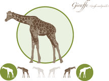 Giraffe illustration logo. Giraffe illustration in jpeg and eps format for editiing. Can be used full colour or white out Stock Images
