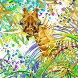 Giraffe illustration.Tropical exotic forest, green leaves, wildlife, giraffe, watercolor illustration. Royalty Free Stock Image