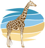 Giraffe Illustration Royalty Free Stock Photo
